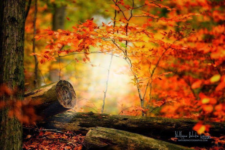 Magiques couleurs de l 39 automne - Les couleurs de l automne ...